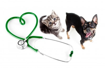 https://www.info-on-high-blood-pressure.com/Pets-And-High-Blood-Pressure.html, Dogs and Cats with high blood pressure
