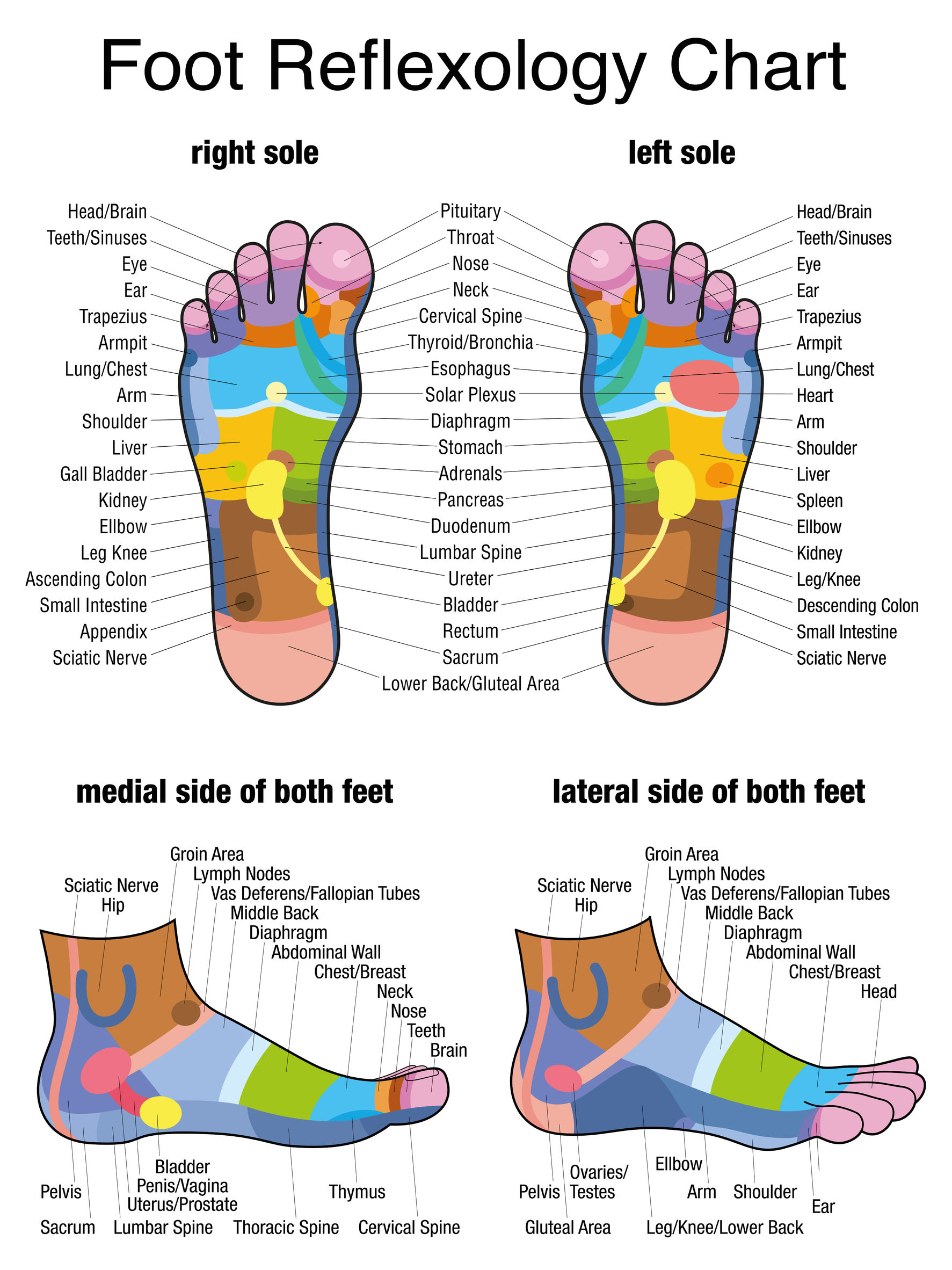 Human Foot Reflex Zones,  https://www.info-on-high-blood-pressure.com/Reflexology.html