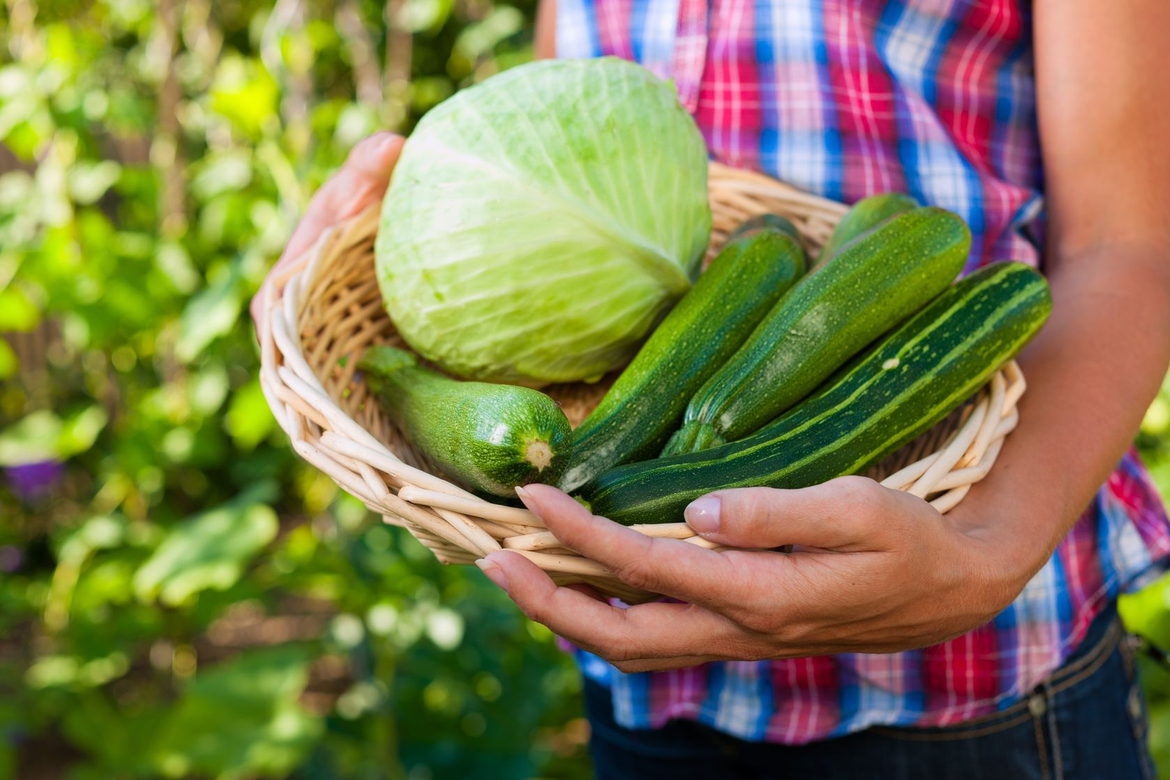 Vegetable Harvest  http://www.info-on-high-blood-pressure.com/Health-Benefits-Of-Gardening.html