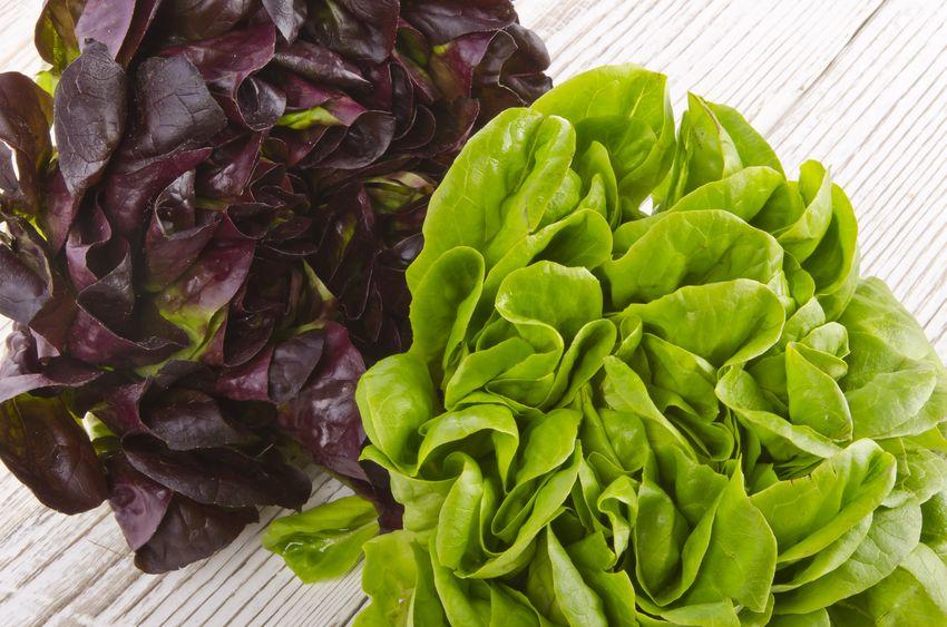Lettuce leaves. https://www.info-on-high-blood-pressure.com/Eat-Right-For-Life.html