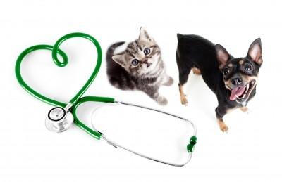 https://www.info-on-high-blood-pressure.com/Pets-And-High-Blood-Pressure.html, Dogs and Cats with high blood pressure