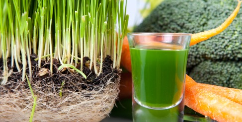 green juice, wheatgrass juice, cucumber juice